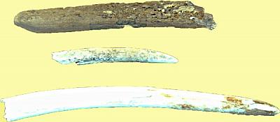 Phoenician ship had ivory in his cargo